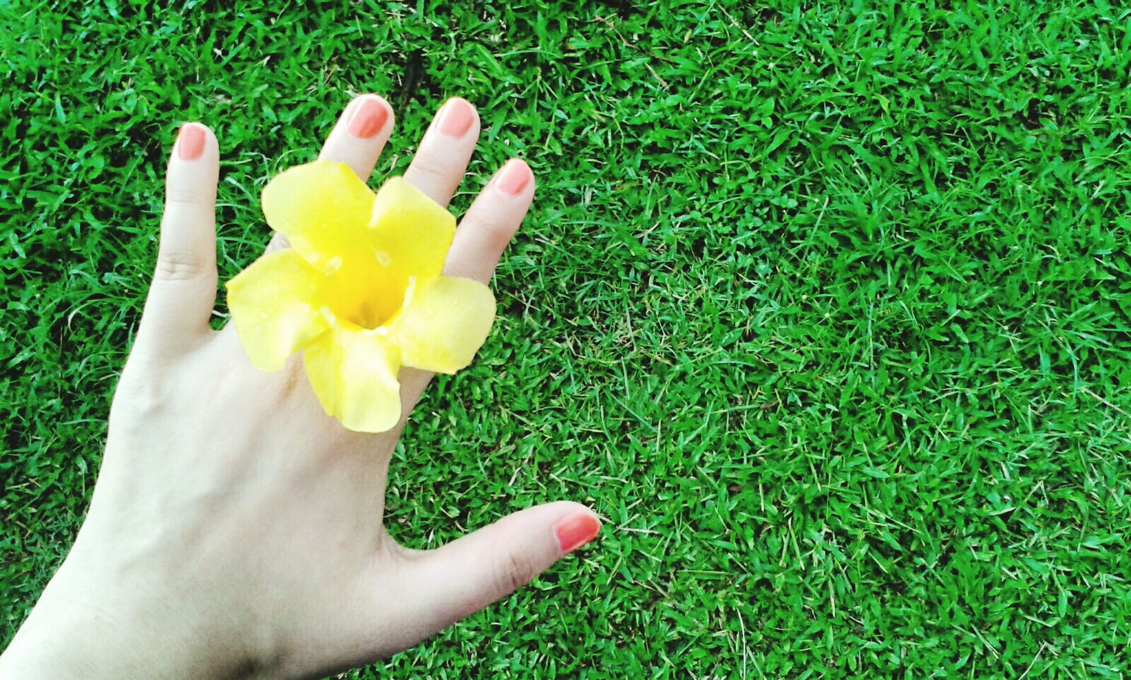 grass, person, flower, green color, field, grassy, part of, holding, unrecognizable person, personal perspective, cropped, freshness, high angle view, growth, yellow, lifestyles, fragility