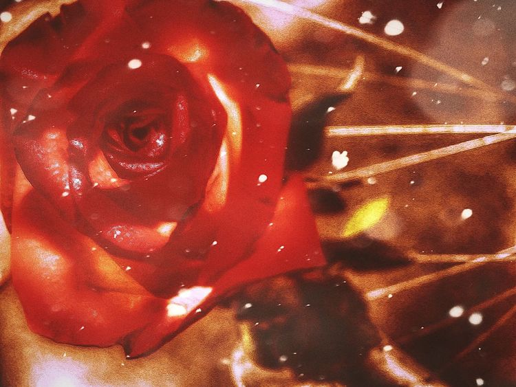 Red Close-up Indoors  Bikelove Tires Rose♥ Fairytales & Dreams Look Up And Thrive Memorable Moment Tranquil Scene Beauty In Nature Transitional Moments From My Point Of View Beauty In Ordinary Things Wish You The Most Happiest Moments! Flower Head Beauty Flower Travel Petal Landscape_photography Photography Nature Happiness Autumn 2016