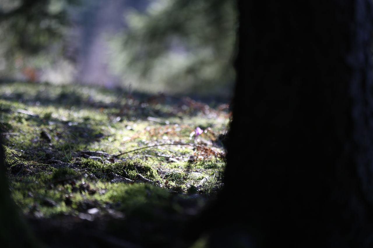 selective focus, nature, moss, no people, close-up, day, growth, beauty in nature, outdoors, fragility, water, freshness