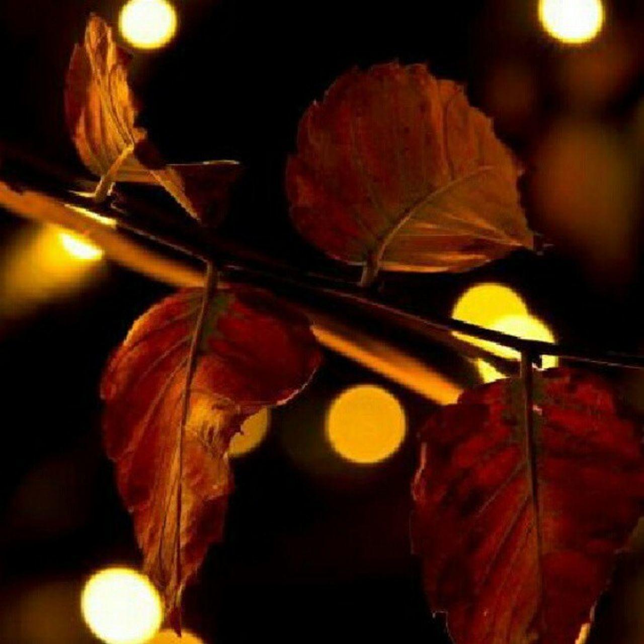 Autumn Nights in Nagoya Autumn Bokeh Bokehlovers Leaves Leaf Nightphotography Night Nagoya Igersjapan Japanphotography Japan Canon Gf_daily Clubpirates Gang_family Instagram Instamood Instagood Instafamous Instagramhub