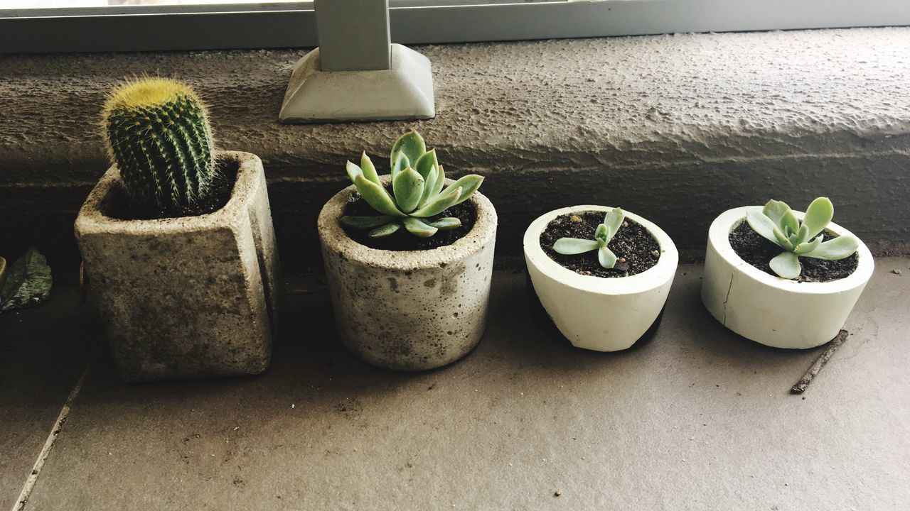 DIY Planters Succulents Plants Pot Potted Plant DIY DIY At Home Plant Growth No People Nature Succulent Plant Cactus Day Indoors  Close-up Cute Cactus Cement Pot EyeEm Nature Lover Growth EyeEm Gallery Plant Potted