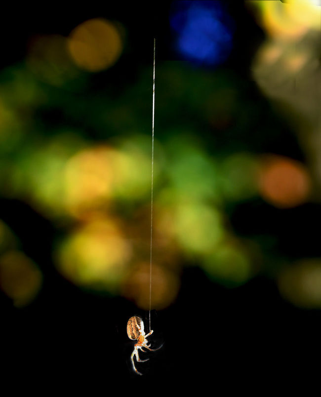 Animal Themes Beauty Of Nature... Close-up Colourful Colours Of Nature Nature Spider Spider Web