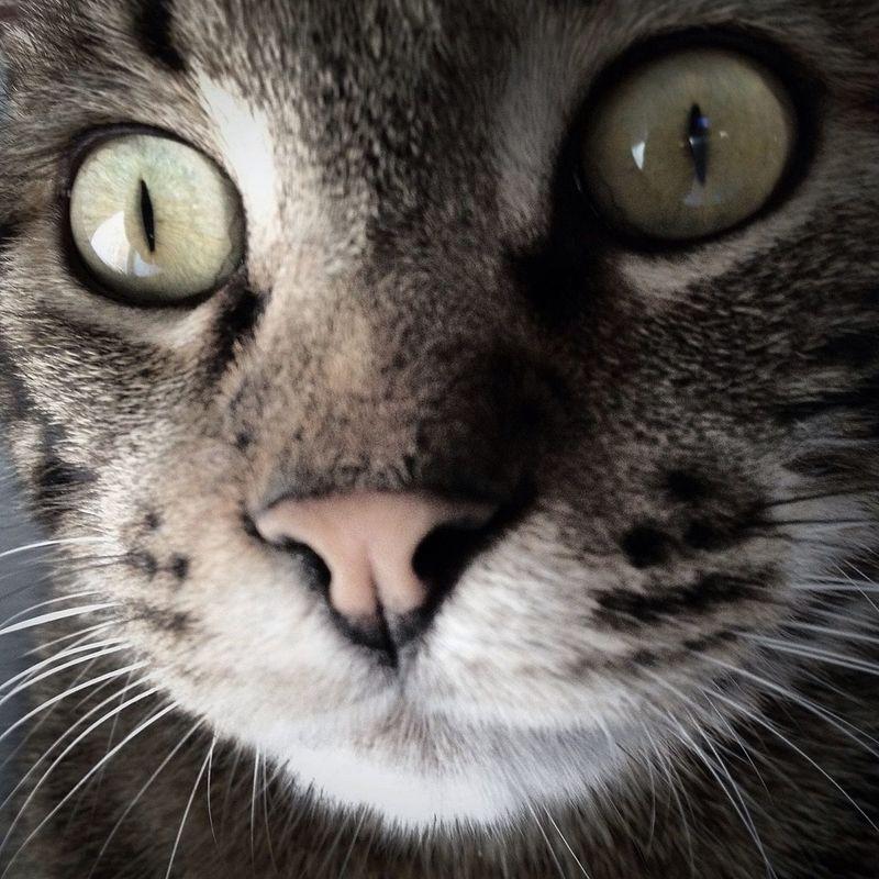 cat by Juanjo_