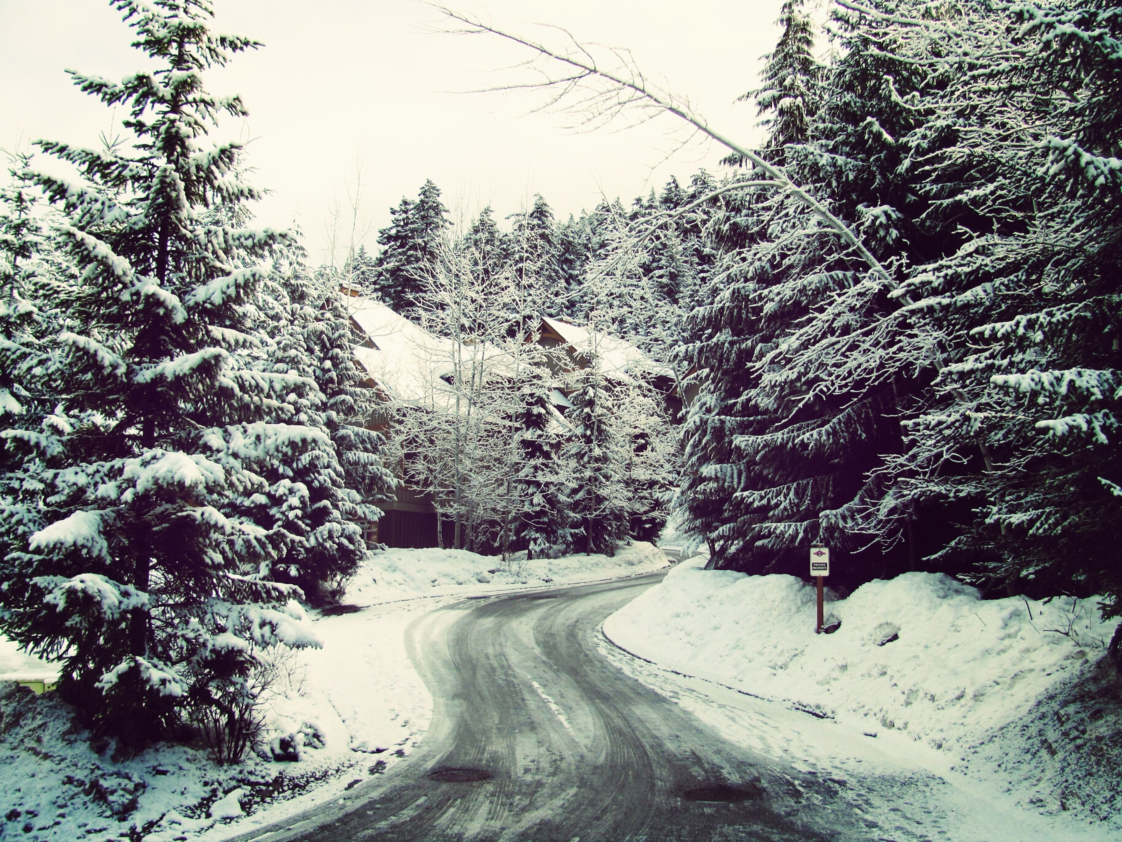 snow, winter, cold temperature, season, weather, tree, covering, road, nature, white color, tranquility, tranquil scene, frozen, the way forward, beauty in nature, scenics, landscape, covered, transportation, mountain