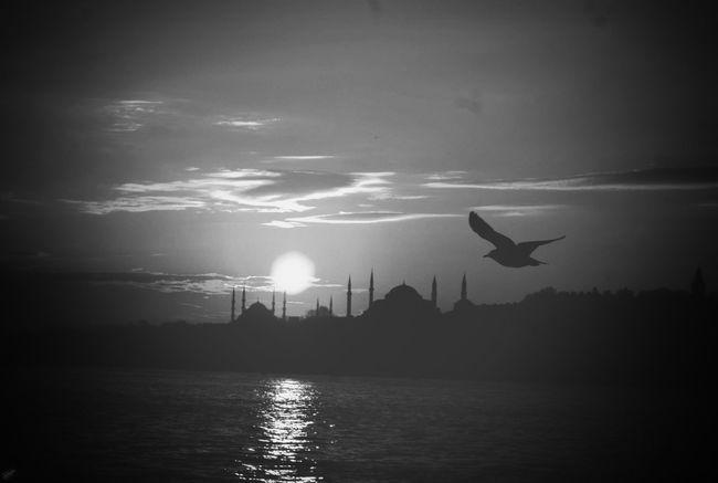 Blackandwhite Istanbul Nature Sunset