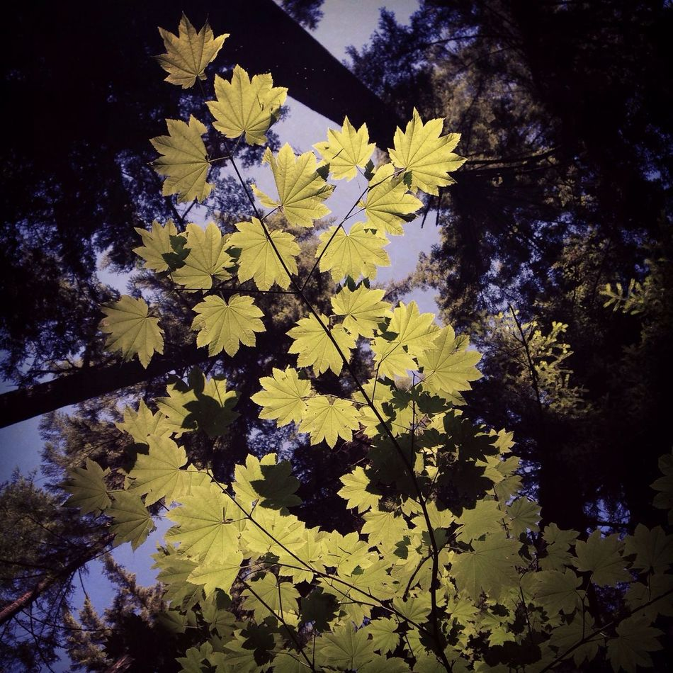 Look Up And Thrive Green Leaves Up Up And Away Through Trees