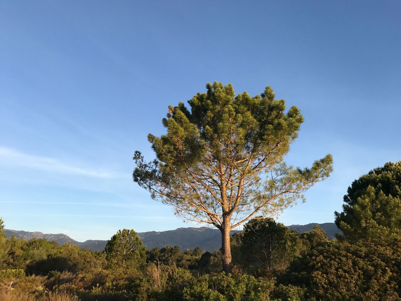 Corsica Corse