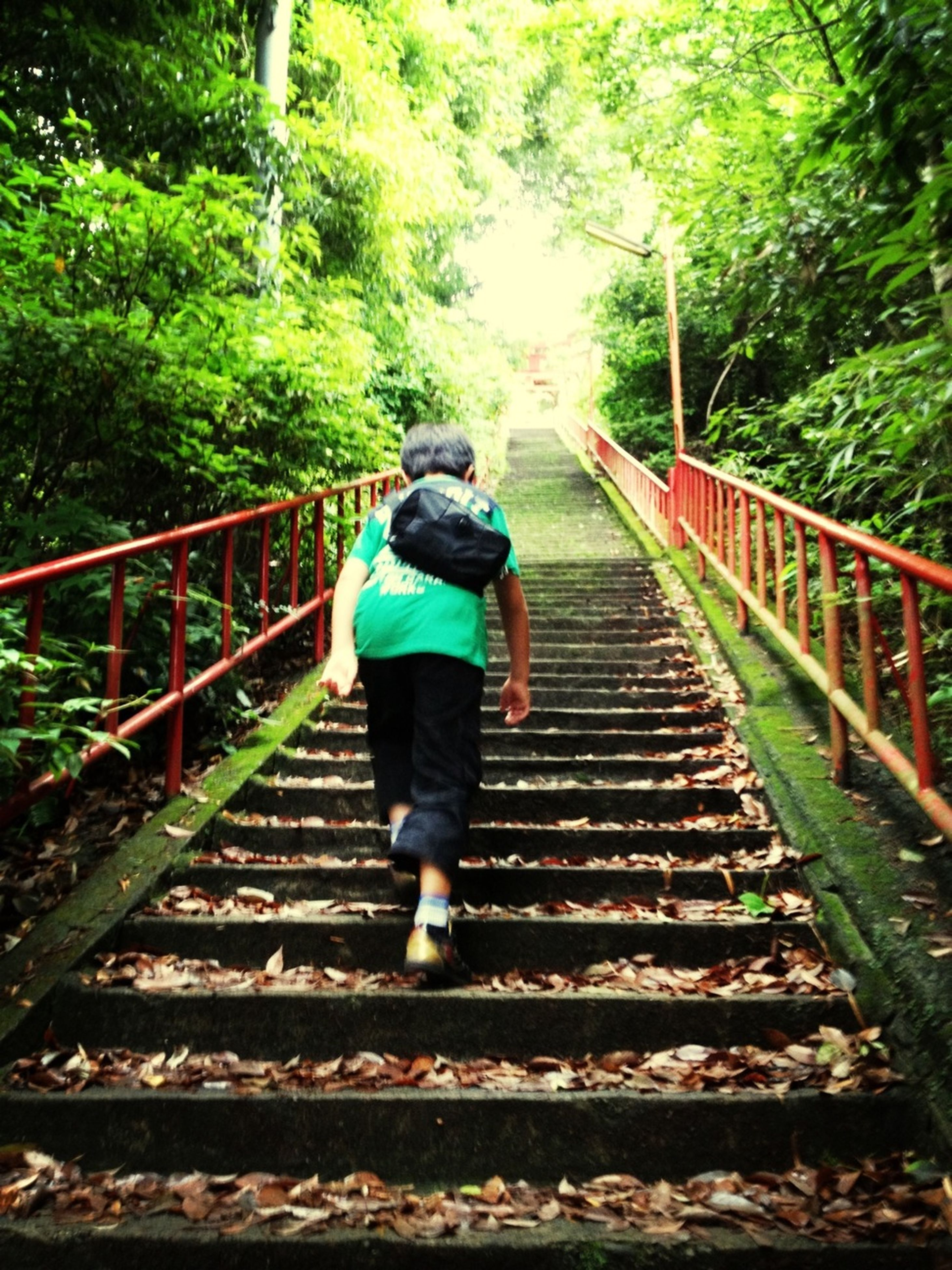 full length, rear view, lifestyles, railing, the way forward, tree, leisure activity, walking, casual clothing, footbridge, connection, forest, railroad track, bridge - man made structure, standing, diminishing perspective, men, steps