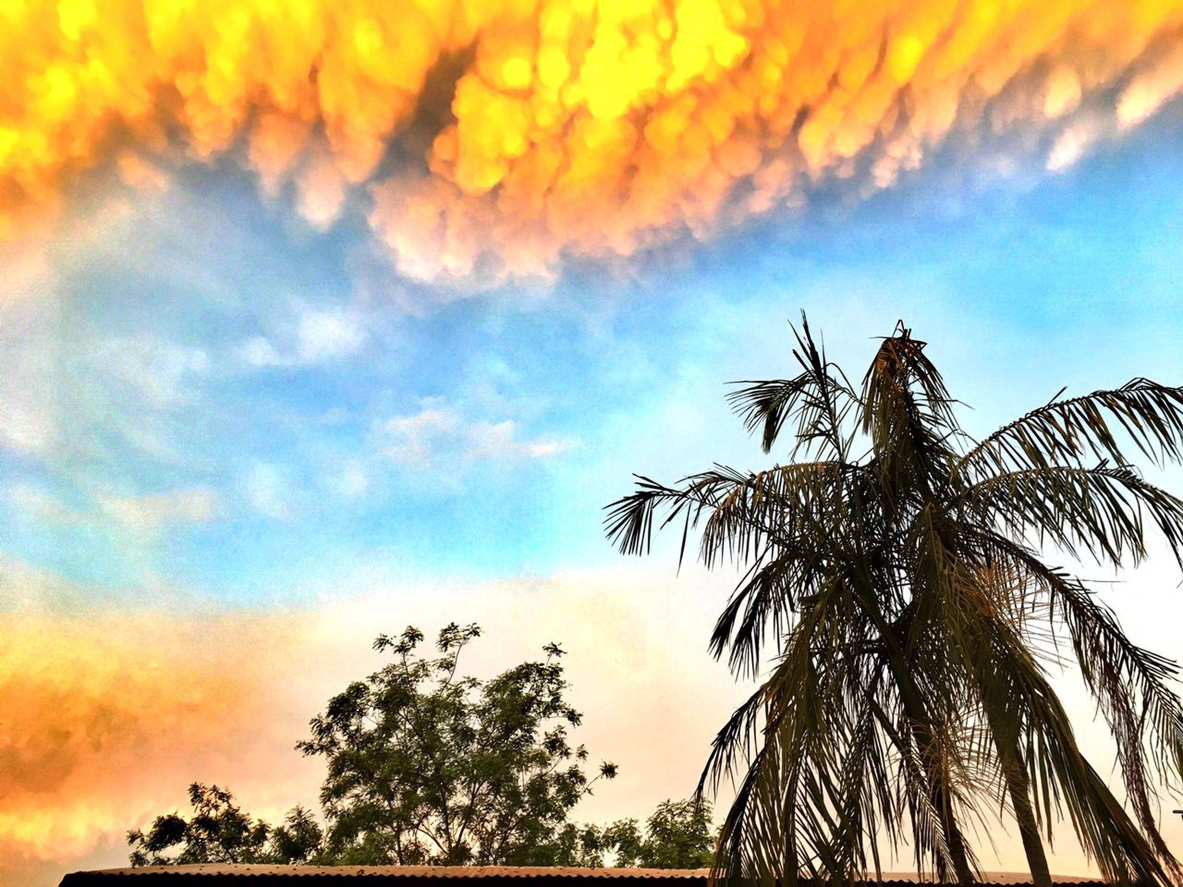 tree, sky, nature, low angle view, cloud - sky, no people, beauty in nature, palm tree, growth, branch, sunset, scenics, outdoors, tranquility, day