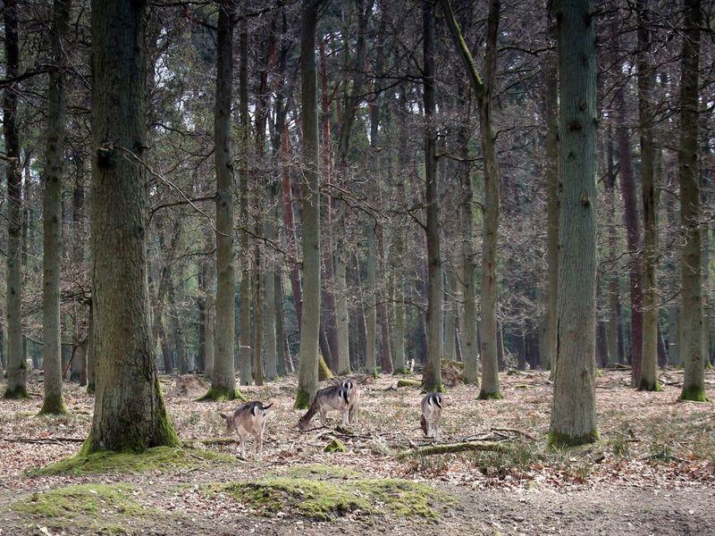Animals Animals Nature Damwild Forest Nature Outdoor Trees