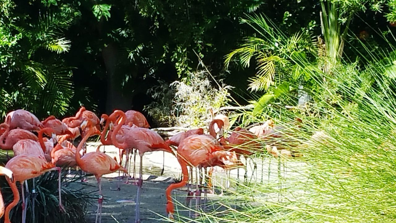 bird, animal themes, nature, flamingo, animals in the wild, water, animal wildlife, day, plant, outdoors, tree, no people, growth, large group of animals, beauty in nature, grass