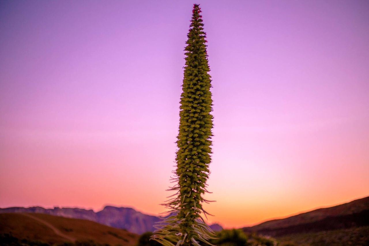 Love ♥ Tenerife Island Beauty In Nature Beautiful Santa Cruz De Tenerife Teide❤ Tajinastes Plants 🌱 Nature Teide National Park