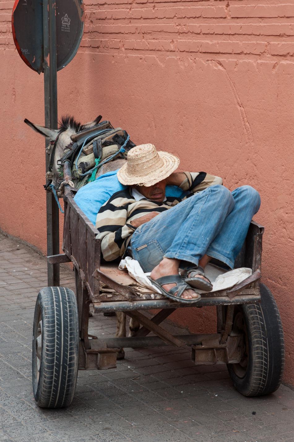 Taking a nap Asleep Candid City Day Donkey Hat Medina Outdoors Sleep Sleeping Streetcandid Streetphotography Transportation