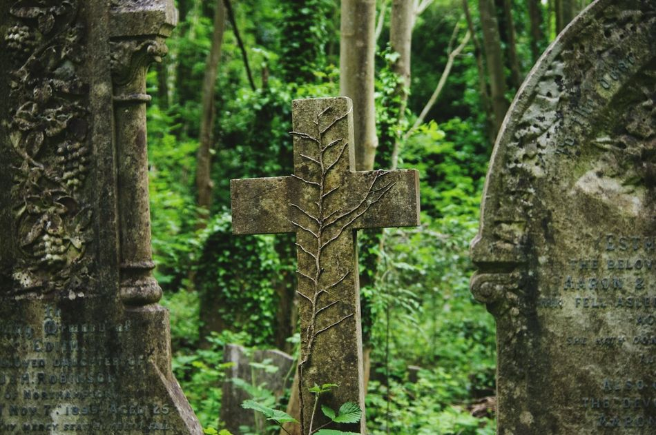 Walking Around The Cemetery Bristol Uk Relaxing Taking Photos Nature On Your Doorstep Nature Urban Landscape Creeping Ivy Scar