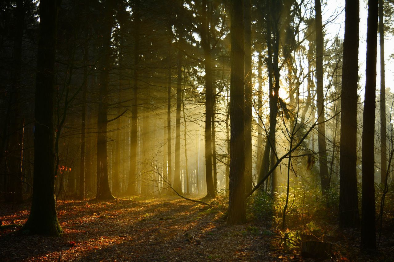 In The Morning In The Forest Light And Shadow Nikon D5200 Nice Day Hanging OutSunbeams Trees Taking Photos Nikonphotography Eye4photography  Color Photography From My Point Of View Süchteln Good Morning Natural Edit Showcase March Eyem Gallery Heimat Nature On Your Doorstep Sun Is Shining Nature