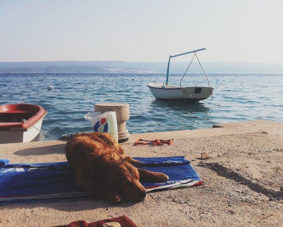 Beautiful stock photos of relax, Animal Themes, Boat, Bollard, Clear Sky