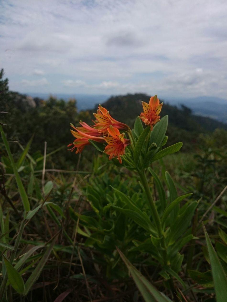 Getting Inspired Flowers Colors Atibaia Pedra Grande The Purist (no Edit, No Filter)