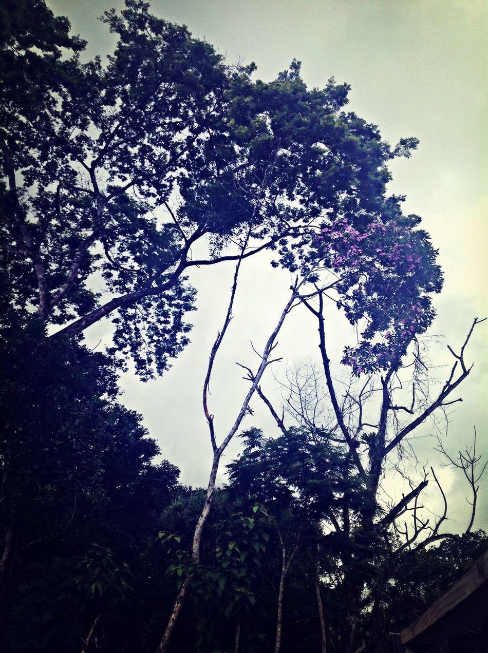 Lindaaaaaa Nature Tree Follow Me Férias