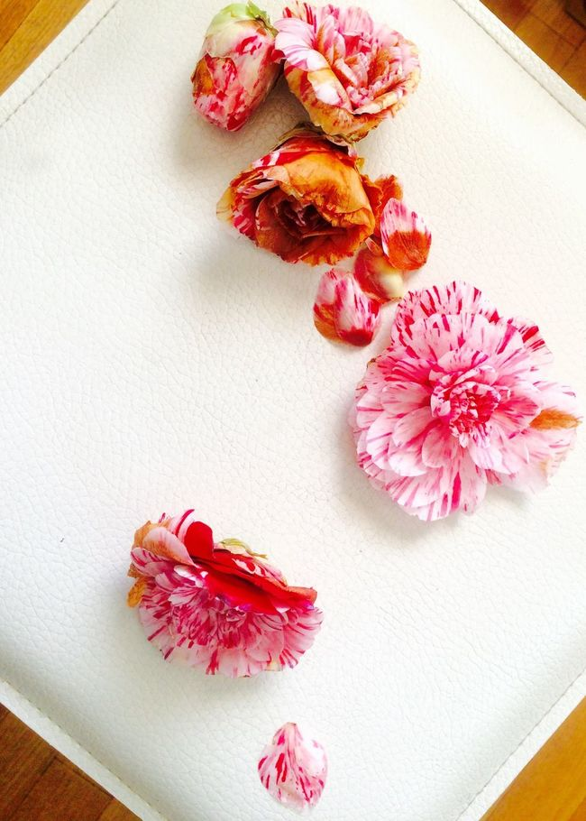 Dried Out Flower Even Clean 枯れても花は綺麗 Sazanqua 山茶花 Pink White Color Japanese  Hello World