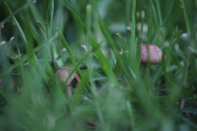 I grow mushrooms in my yard for reasons Macro_perfection Rebelmacro Ic_macro Insta_crew Macro_aroundworld Macro_connect Macroaddictsanonymous Insta_pick_macro Igbest_macros Insta_pick Nature Ig_captures_macro Ig_captures Bestshooter_macro Nature_perfection Macro_brilliance Igers IGDaily Igaddict Igersoftheday Ignation Macro Mb_funghi Royalsnappingartists Macrophotography infamous_familymacromogul