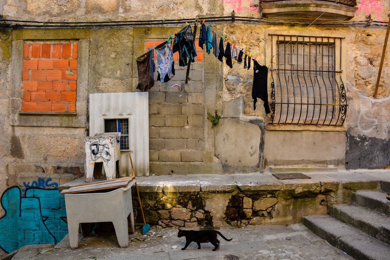 architecture, built structure, building exterior, clothesline, drying, domestic cat, hanging, no people, day, outdoors, animal themes, domestic animals, mammal
