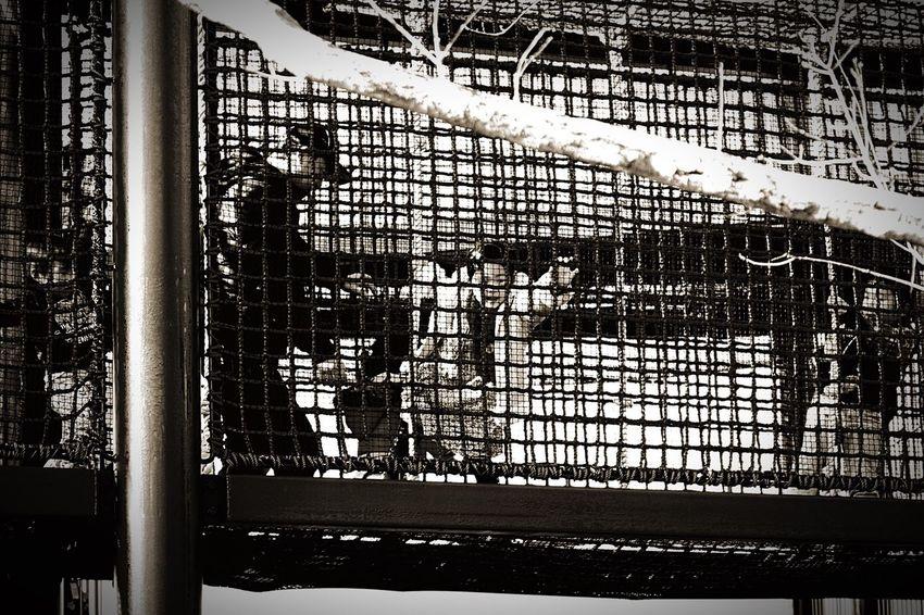 ニンゲン、霊長類ヒト科 学術名:ホモサピエンス。 Human, primate hominid, academic name: Homo sapiens. 地球上で最も賢く最も愚かで、そして最も愛おしいイキモノ。The most wise most stupid on the planet, and most adorable creatures. Zoo The Human Condition Human People People Watching Snapshot Taking Photos Enjoying Life Blackandwhite Black And White
