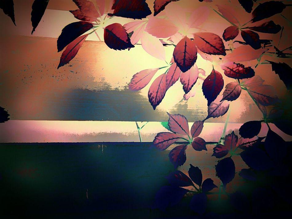 Garden Garden Photography Nature Leaves Plants And Flowers Plant Climbingplant Eyeemphotography Hanging Out Check This Out EyeEm Best Edits Nederland Photooftheday First Eyeem Photo EyeEmbestshots Nederlands Hello World Creativity Taking Photos EyeEm Best Shots Enjoying Life Summer2016 OpenEdit Photography Art