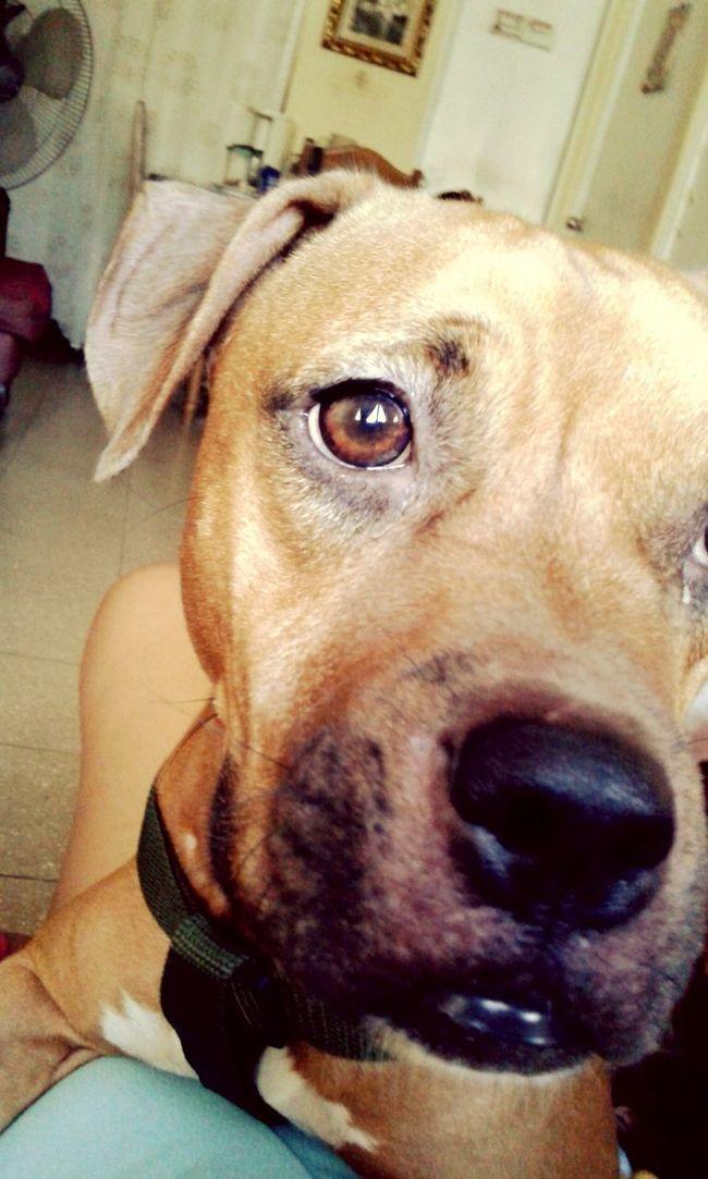 Hi! Pet Love Petstagram My Pets♥ Ilovemypuppy Molly First Eyeem Photo