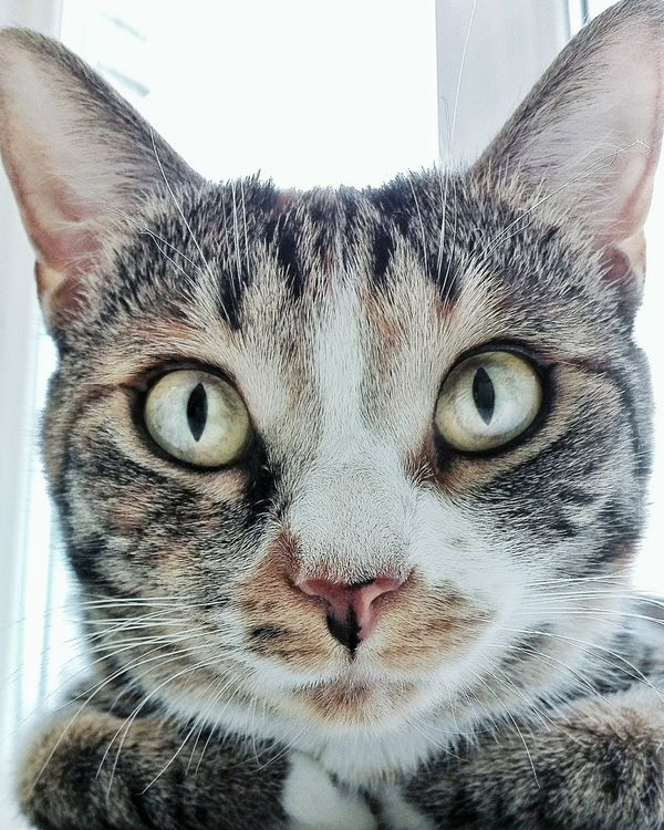 Love Cute Spb_live пупс Cat Spb Elsa♡ кошка пушистик котеночек любимаяпитомица кошки это кошки котёнок Cateyes MyFavorite  эльза это эльза Моя кошка Girl Spb_live Питер EyeEm Питер Питер ❤️ Санкт-Петербург In Санкт-Петербург кошечка😺🐱