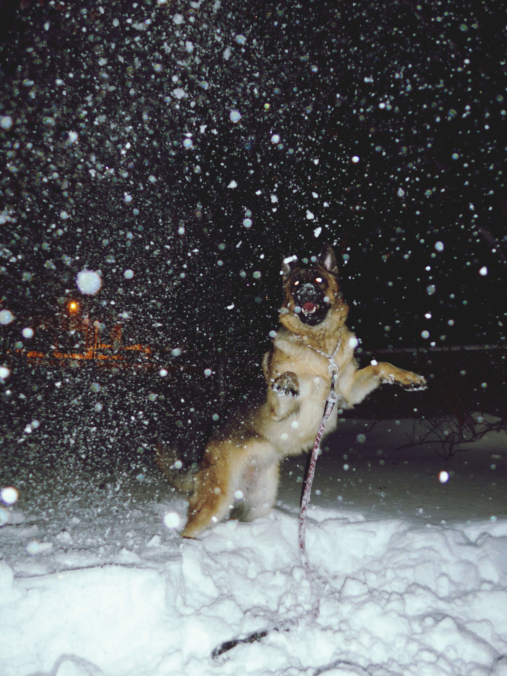 winter, cold temperature, snow, season, one animal, water, animal themes, looking at camera, wet, portrait, night, front view, dog, one person, full length, weather, splashing, motion, pets, reflection