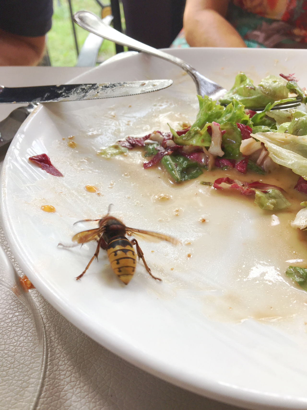 Wasp on a plate in summer Animal Bee Dangerous Food Insect Plate Summer Toxic Wasp Wespe