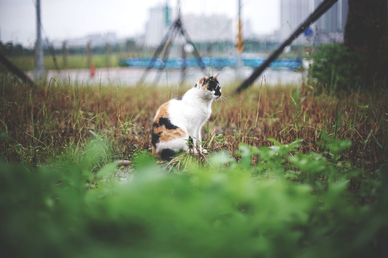 The Great Outdoors - 2017 EyeEm Awards One Animal Animal Pets Domestic Animals Mammal Animal Themes Nature Beauty 街貓 Animals In The Wild Katze Domestic Cat Green Nature Green Color