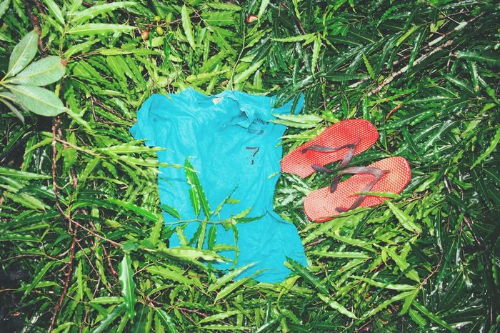 Green Color Grass High Angle View Day Blue No People Field Outdoors GrowthGreenery Life Style Life Style In France Leaf leaf Nature Close-up Benyan T Shirt T Shirt Collection Chapel Foot Wear  Sneaker Social Issues Green Foot Wear , Pink Combat Boots ( : Foot Wear For Today