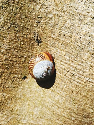 Snail On A Tree High Angle View Ball Sand Day No People Outdoors Nature Close-up