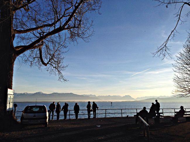 Bodensee Fog Lindau Winter