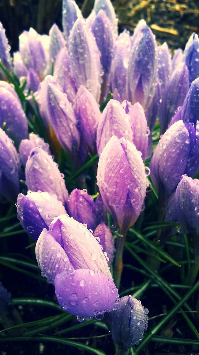 """Budding Beauties"" - A Brooklyn Soul NYC Rain Spring Spring Flowers"