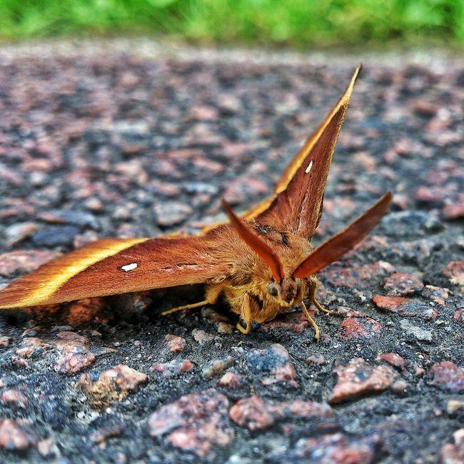 Nikon Nikon D3200 Papillion Butterfly