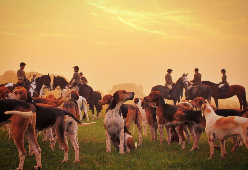 Beautiful stock photos of jagd, large group of animals, sunset, livestock, herd