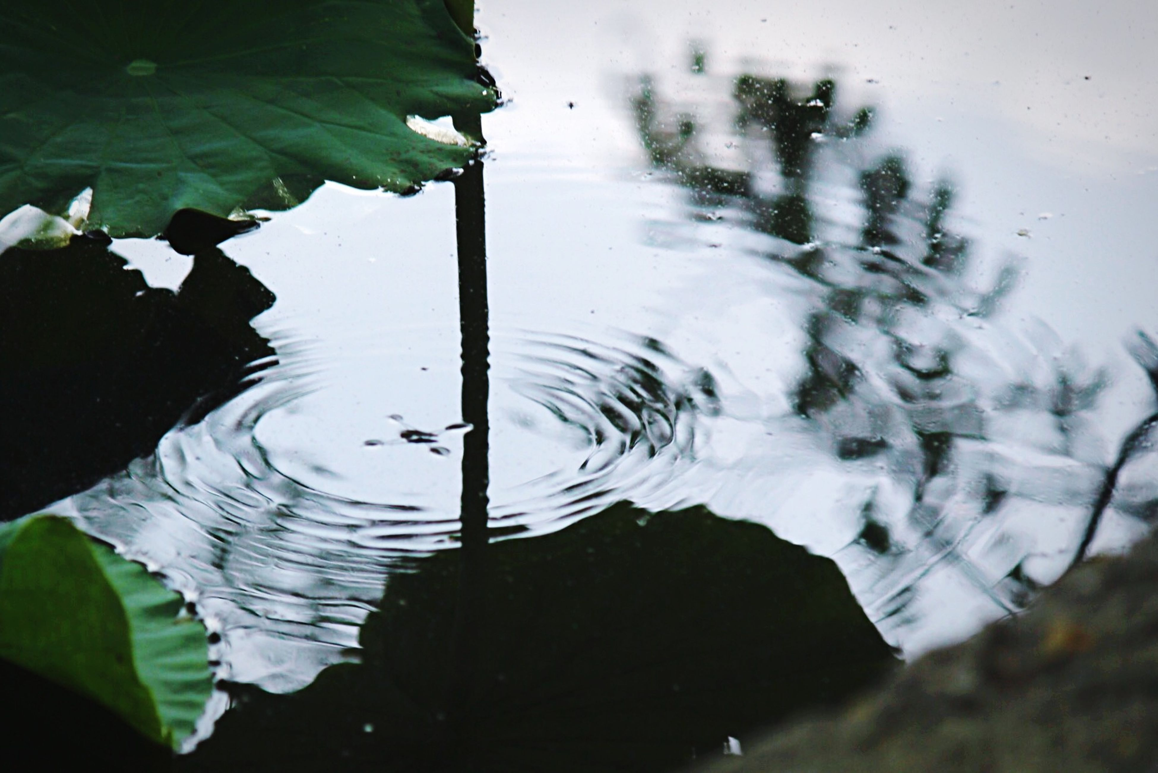 water, leaf, reflection, close-up, nature, wet, drop, plant, lake, focus on foreground, growth, beauty in nature, tranquility, rain, day, no people, outdoors, pond, fragility, transparent