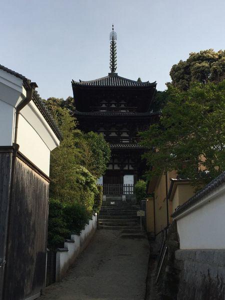 Nara Japanese Temple Japan 當麻寺 ぼたん 奈良 寺