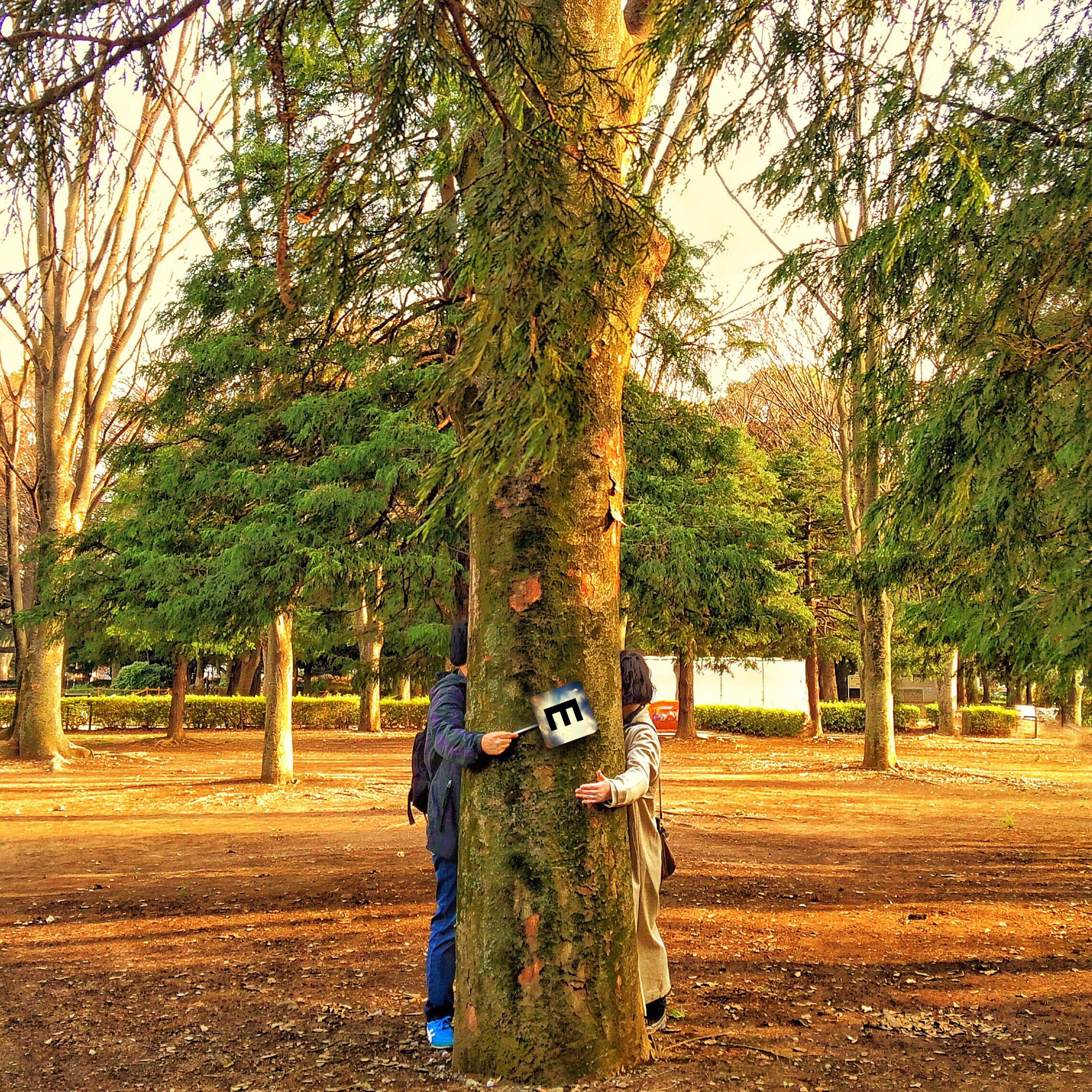 tree, lifestyles, leisure activity, casual clothing, full length, growth, day, nature, outdoors, tree trunk, change, tranquility, park, landscape