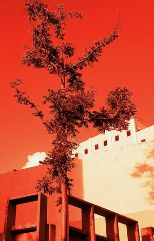 Red Architecture Tree Sky Colorsplash San Juan PR City View  Building Color Palette Shapes And Forms Light And Shadow Still Life Popular Perspective The Graphic City