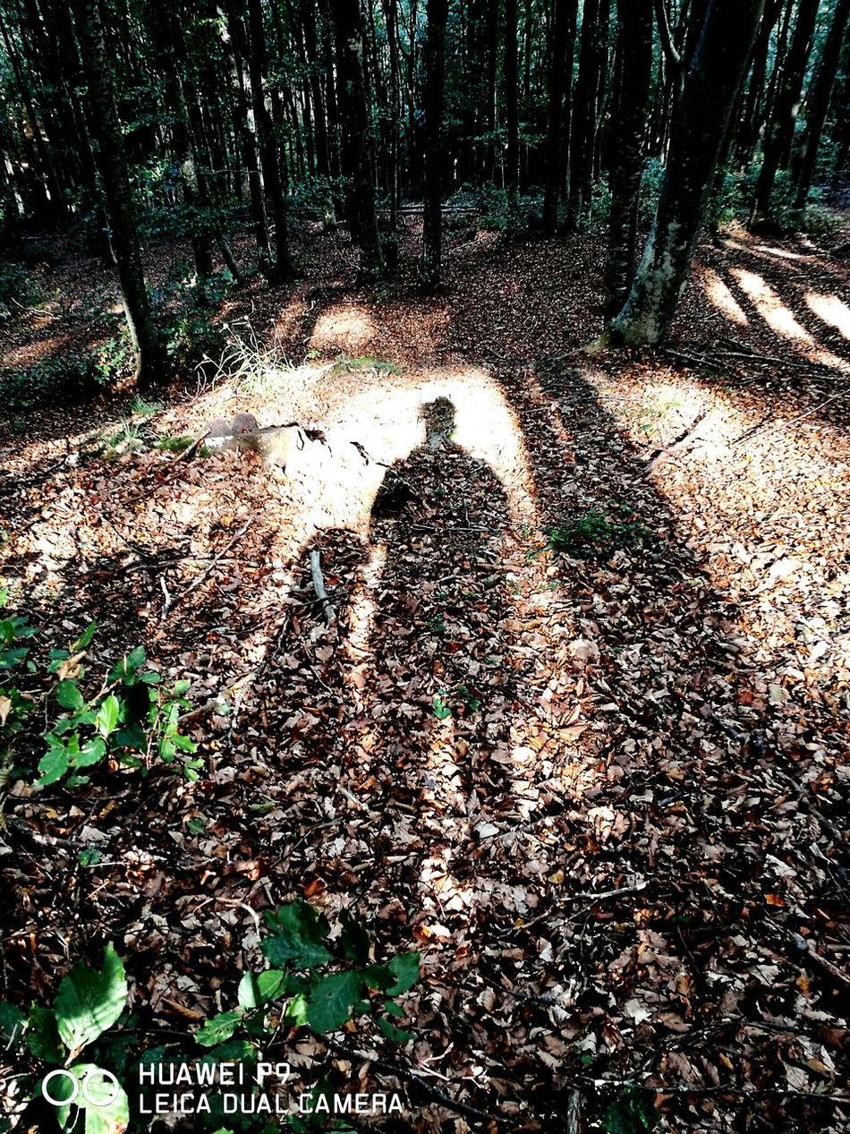 Naturelovers Forestwalk Dogs Life Tree Sempreinsieme Sempreingiro Luceeombra