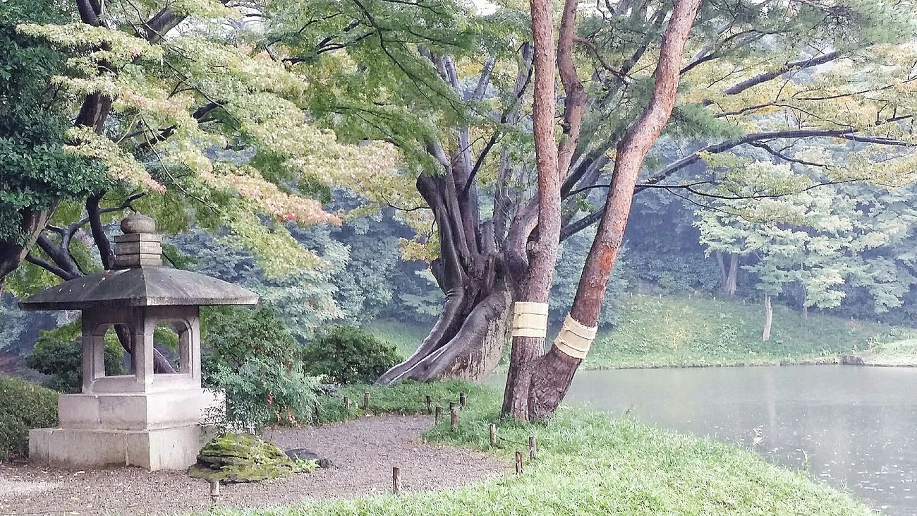 Eye Em Nature Lover Naturelover Nature Enjoying Nature Nature Photography Beautiful Nature Nature_collection Koishikawa Korakuen Garden Autumn Fall Seasons Changing Seasons Trees Colours Tokyo 2015 Autumn 2015 Tokyo Japan Travel Photography