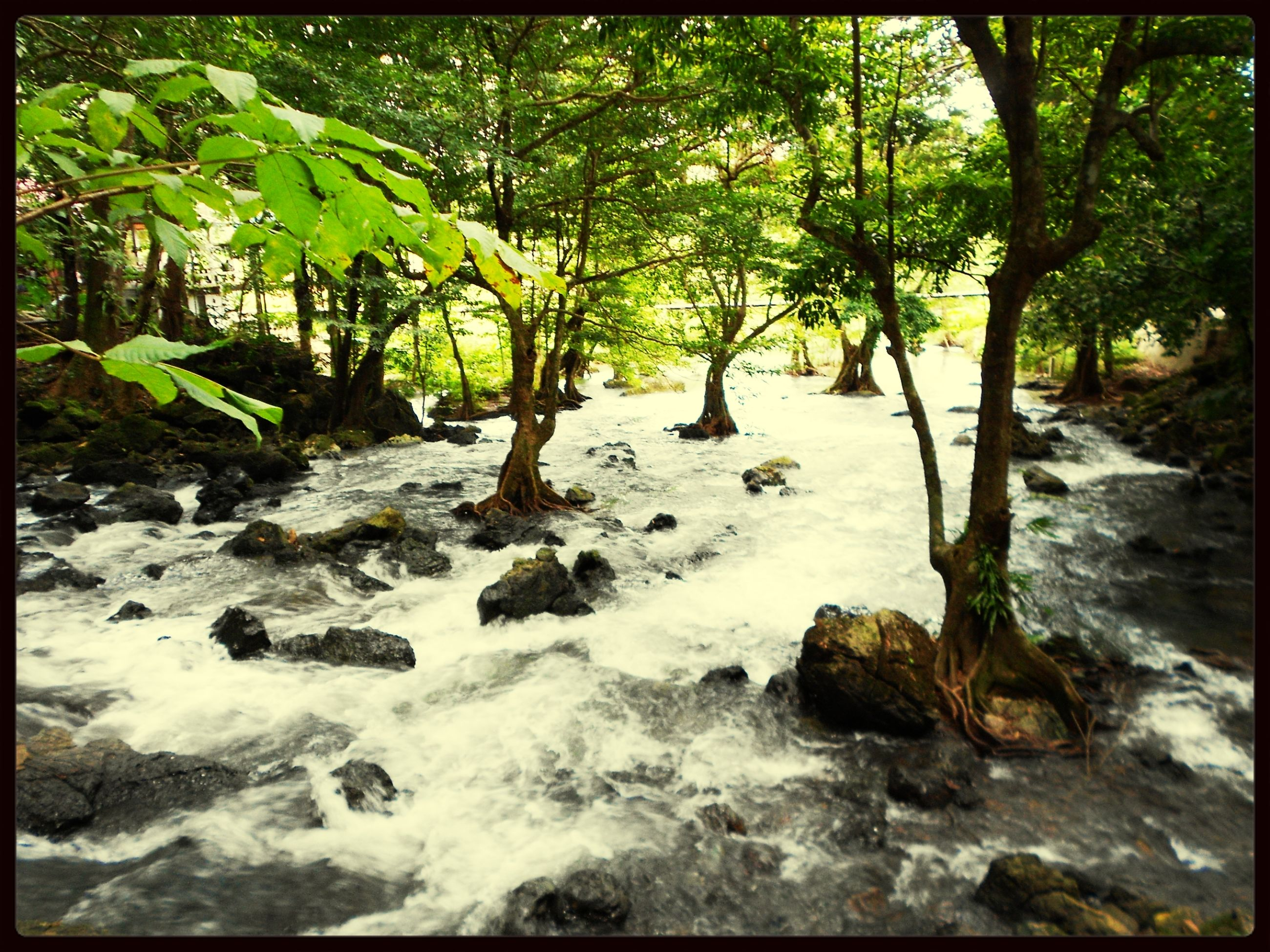 transfer print, auto post production filter, tree, water, nature, rock - object, beauty in nature, tranquility, growth, scenics, forest, tranquil scene, stream, green color, day, sunlight, rock, outdoors, branch, plant