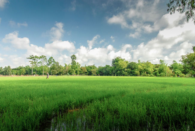 a day in Vietnam nature Agriculture Beauty In Nature Cloud - Sky Cultivated Land Delta Field Grassy Green Green Color Landscape Mekong River Nature Nature Outdoors Plant Rural Scene Scenics Sky Tranquil Scene Tranquility Tree Vietnam