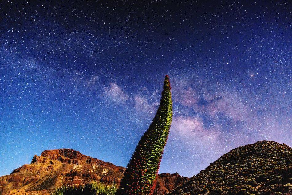 Taking Photos Tenerife Island Teide❤ Beauty In Nature Tajinastes Teide Nightphotography Astrophotography Landscape_photography Landscape_Collection Night Lights Teide National Park Santa Cruz De Tenerife Stars