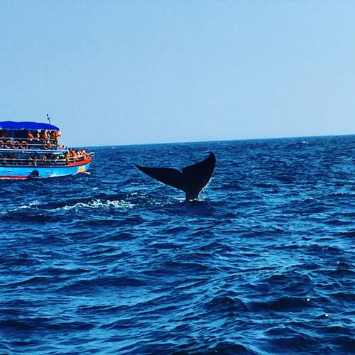 Animal Themes Animals In The Wild Blue Blue Whae Clear Sky Day Horizon Over Water Mammal Nature Nautical Vessel No People Outdoors Sea Sky Sri Lanka Sri Lanka Travel Transportation Travel Destinations Water Whale Whale Atchi What I Value