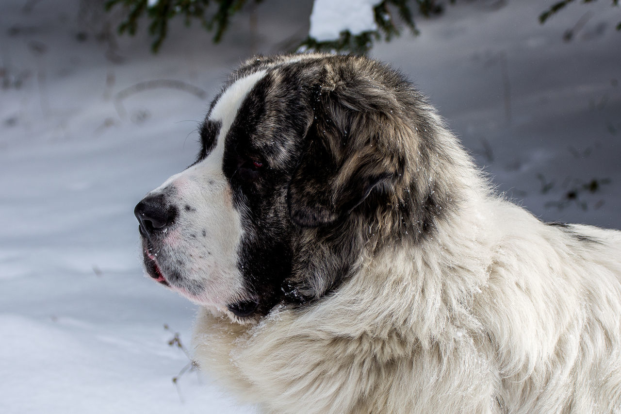 ||pako|| Animals Colors Detail Dogs Eye4photography  EyeEm Best Shots EyeEm Nature Lover Mountains Nikon Photography Snow Winter