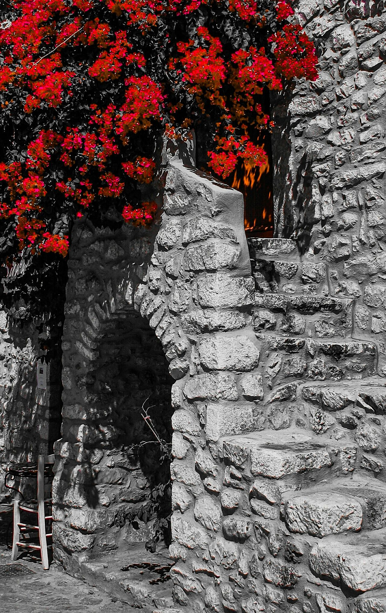 Bougainvillea Carmine Stairs Stone House Flowers Red Flowers Red Red And Black Nature Beauty In Nature Neighborhood Map The Street Photographer - 2017 EyeEm Awards The Architect - 2017 EyeEm Awards The Great Outdoors - 2017 EyeEm Awards Mani Greece